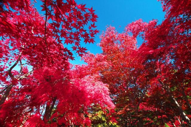 秋といえば・・・②