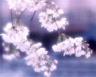 kanri-yamauchi-02-b.jpg