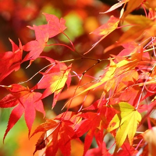 【○○の秋と言えば②】