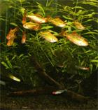 ラウンジ 熱帯魚