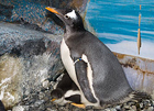 ペンギンはいかが?